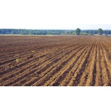 >В Чугуевском районе продам 45 га, земли сельхоз. назначения