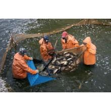 >Продам рыбное хозяйство.