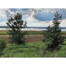 >Продам шикарный участок с видом на сосновый лес и водоем